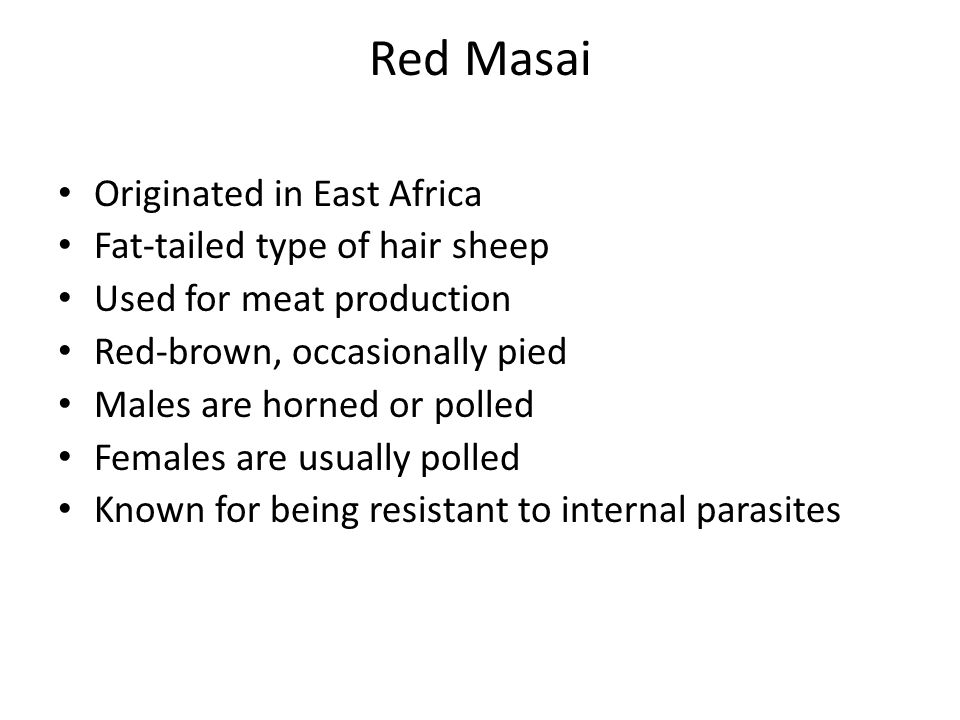Originated in East Africa Fat-tailed type of hair sheep Used for meat production Red-brown, occasionally pied Males are horned or polled Females are u