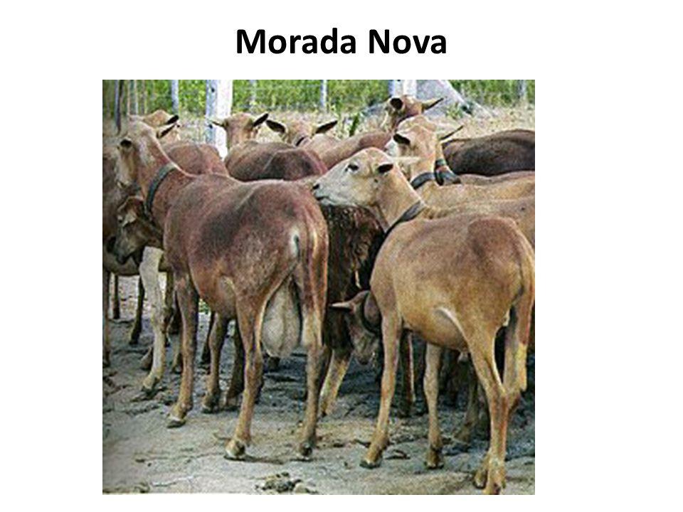 Morada Nova