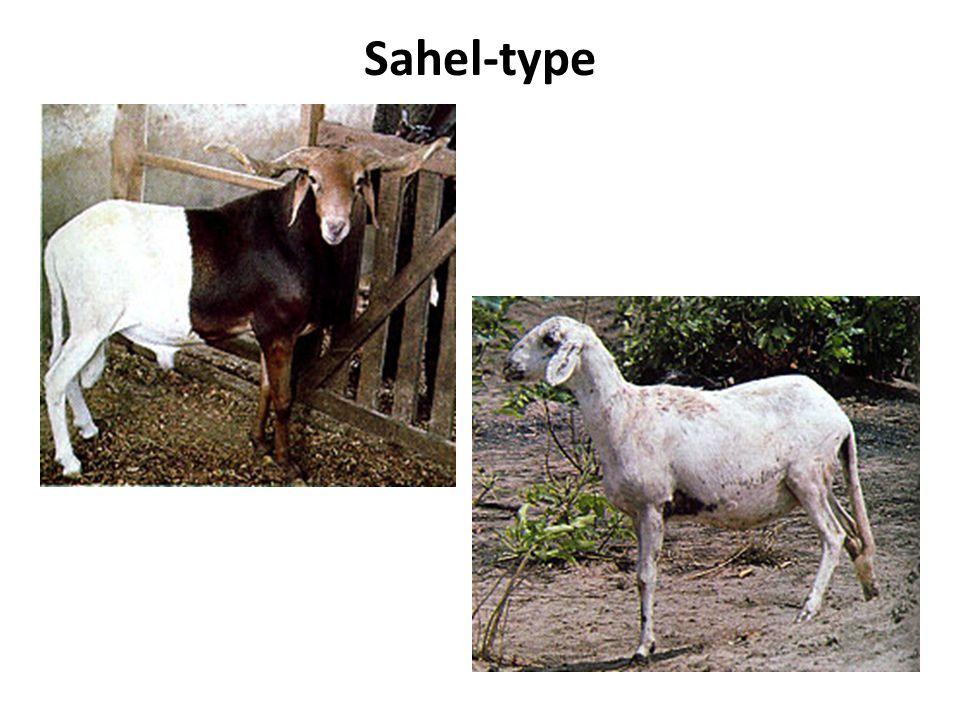 Sahel-type
