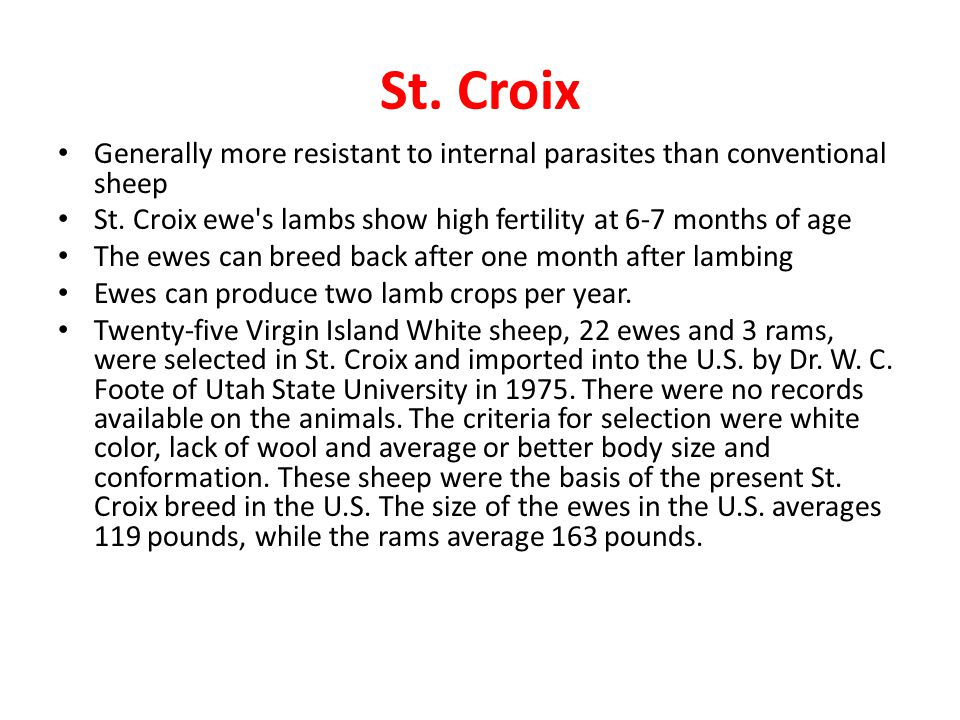 St. Croix Generally more resistant to internal parasites than conventional sheep St. Croix ewe's lambs show high fertility at 6-7 months of age The ew