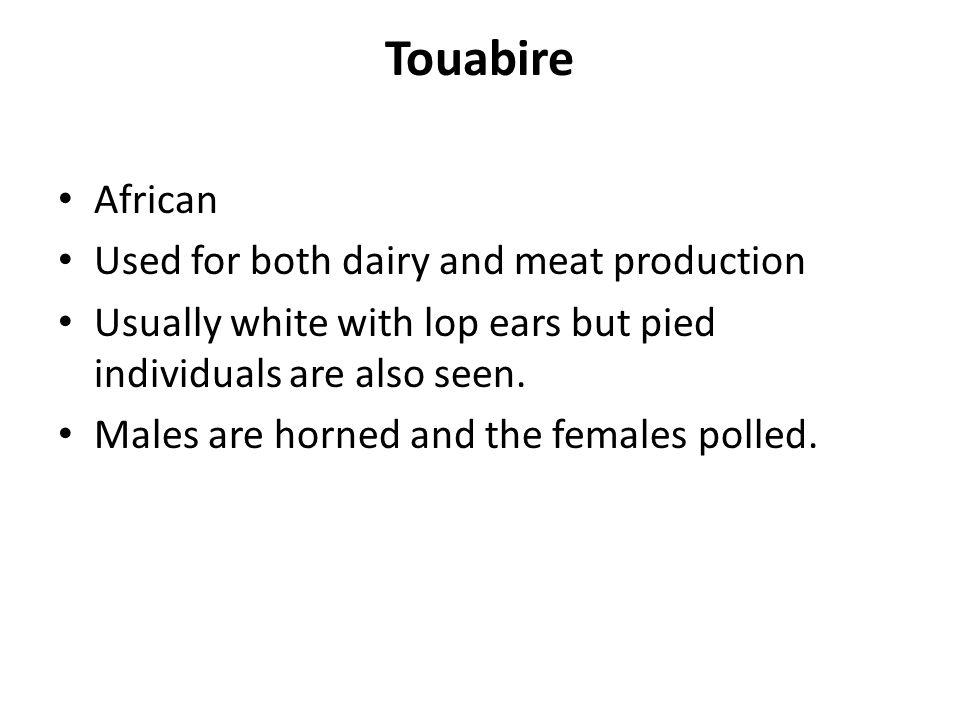 African Used for both dairy and meat production Usually white with lop ears but pied individuals are also seen. Males are horned and the females polle