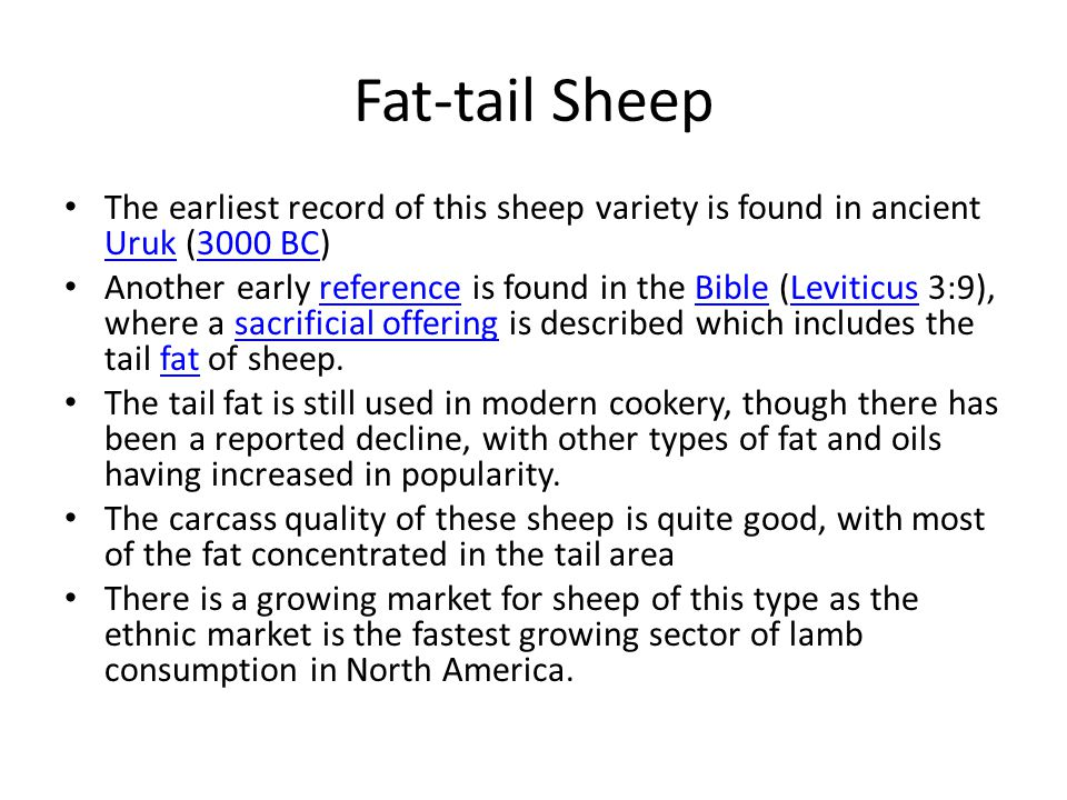 Fat-tail Sheep The earliest record of this sheep variety is found in ancient Uruk (3000 BC) Uruk3000 BC Another early reference is found in the Bible