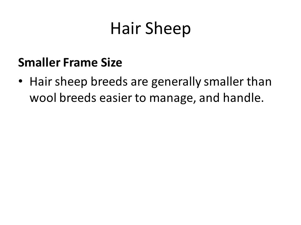 Hair Sheep Smaller Frame Size Hair sheep breeds are generally smaller than wool breeds easier to manage, and handle.