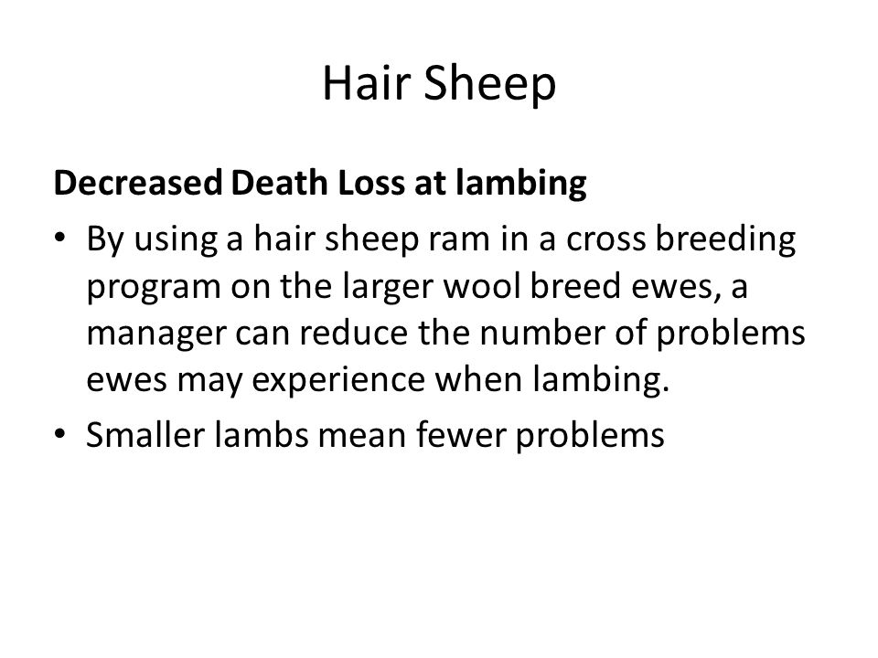 Hair Sheep Decreased Death Loss at lambing By using a hair sheep ram in a cross breeding program on the larger wool breed ewes, a manager can reduce t