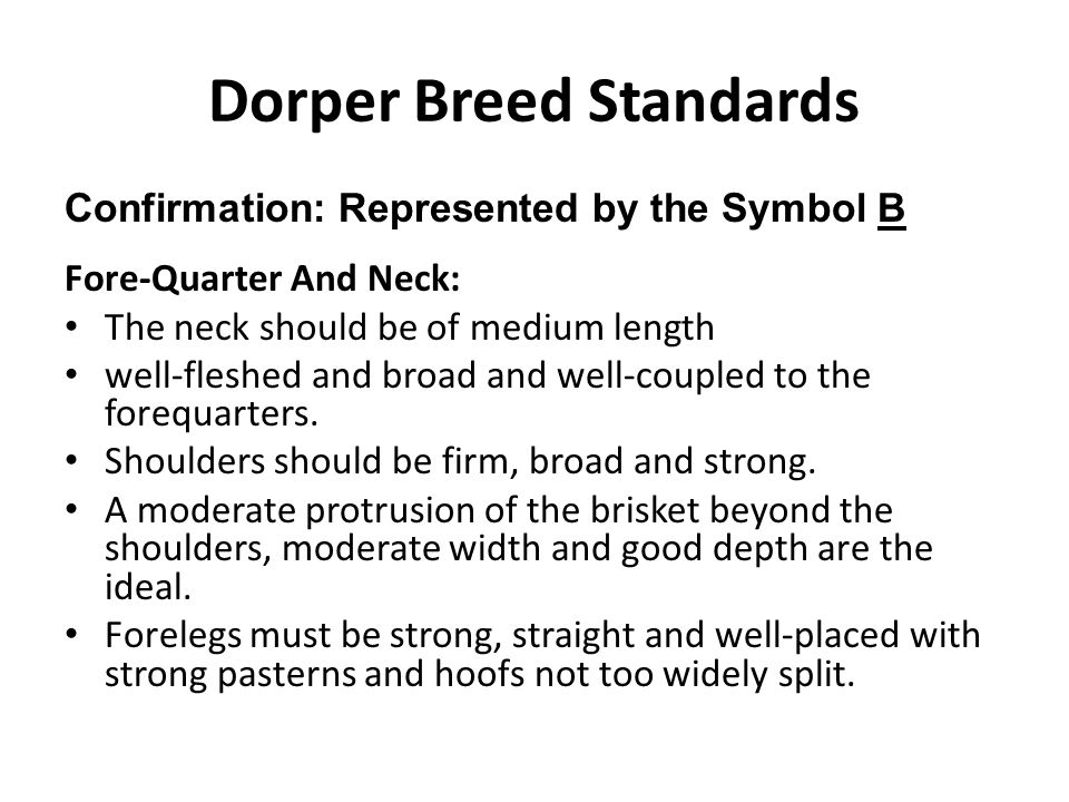 Dorper Breed Standards Confirmation: Represented by the Symbol B Fore-Quarter And Neck: The neck should be of medium length well-fleshed and broad and