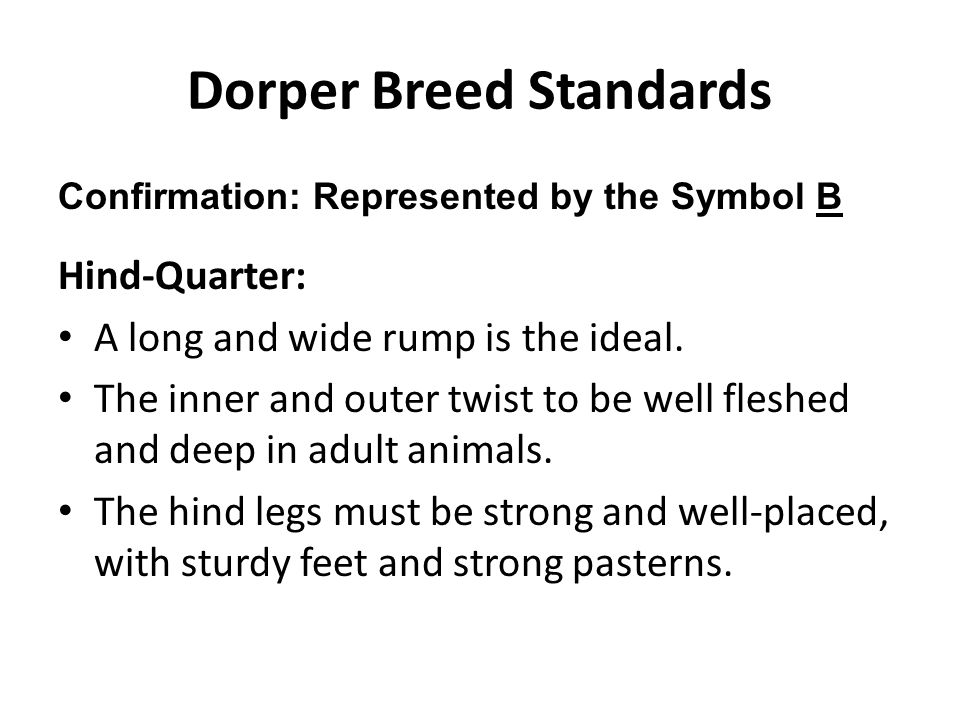 Dorper Breed Standards Confirmation: Represented by the Symbol B Hind-Quarter: A long and wide rump is the ideal. The inner and outer twist to be well