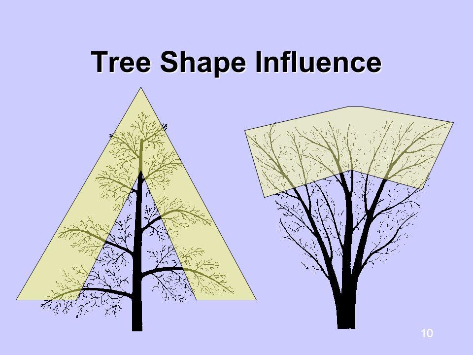 10 Tree Shape Influence