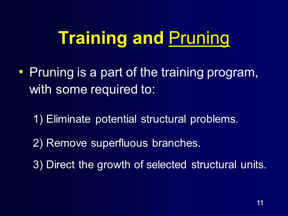11 Training and Pruning Pruning is a part of the training program, with some required to: 1) Eliminate potential structural problems.