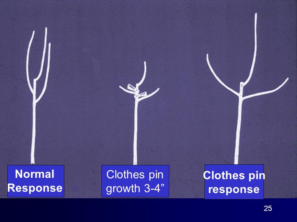 25 Normal Response Clothes pin growth 3-4 Clothes pin response