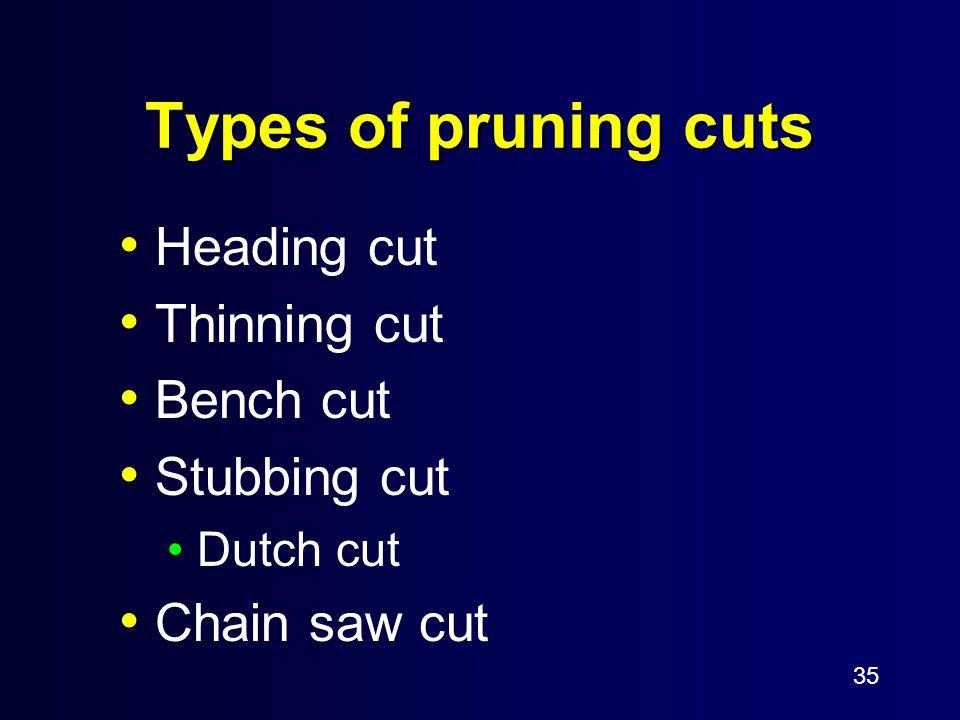 35 Types of pruning cuts Heading cut Thinning cut Bench cut Stubbing cut Dutch cut Chain saw cut