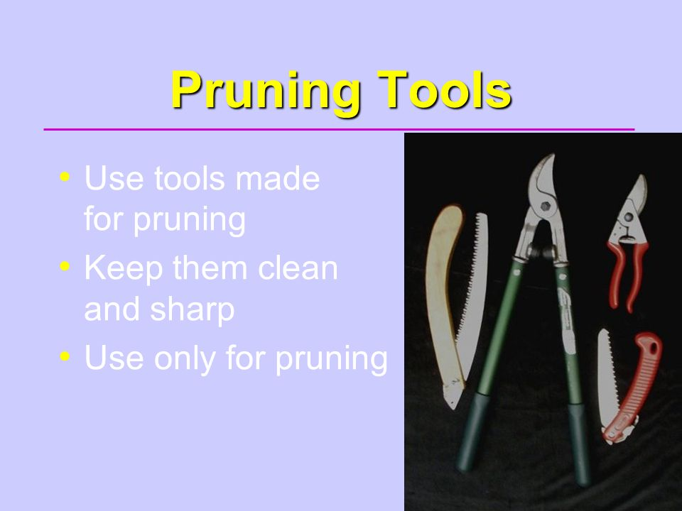 43 Pruning Tools Use tools made for pruning Keep them clean and sharp Use only for pruning