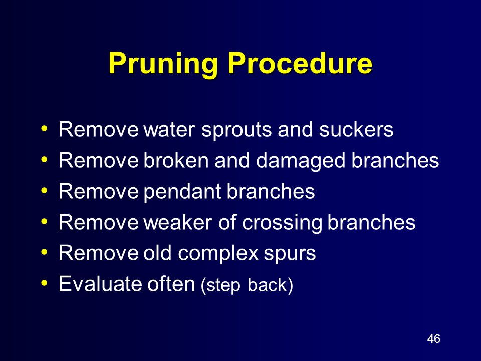 46 Pruning Procedure Remove water sprouts and suckers Remove broken and damaged branches Remove pendant branches Remove weaker of crossing branches Re