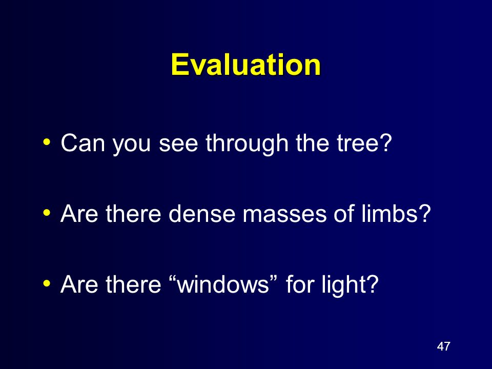 "47 Evaluation Can you see through the tree? Are there dense masses of limbs? Are there ""windows"" for light?"