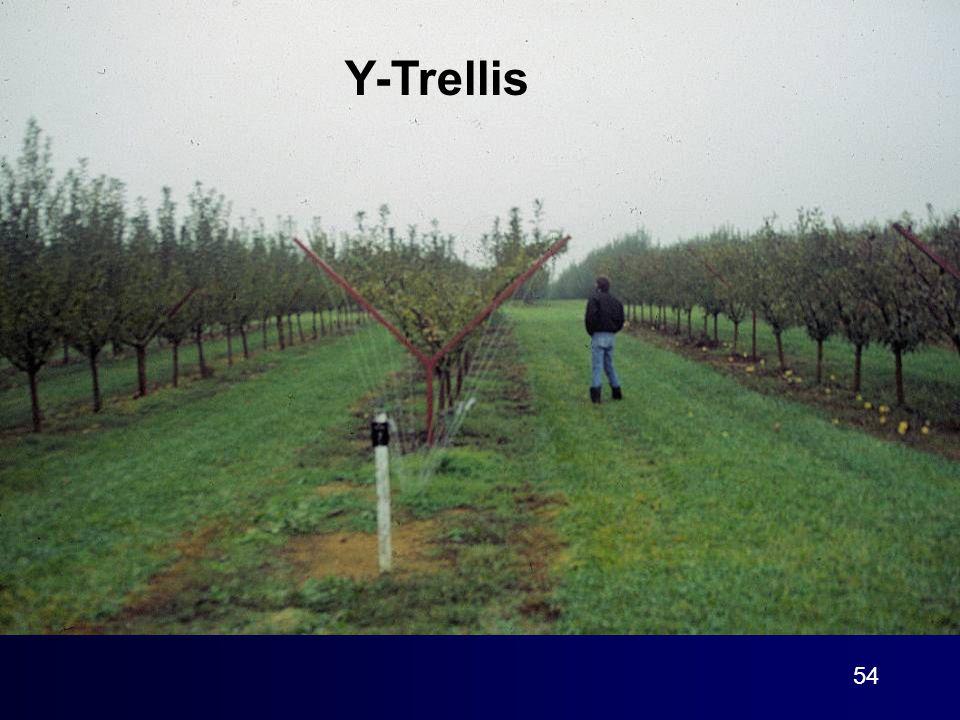 54 Y-Trellis