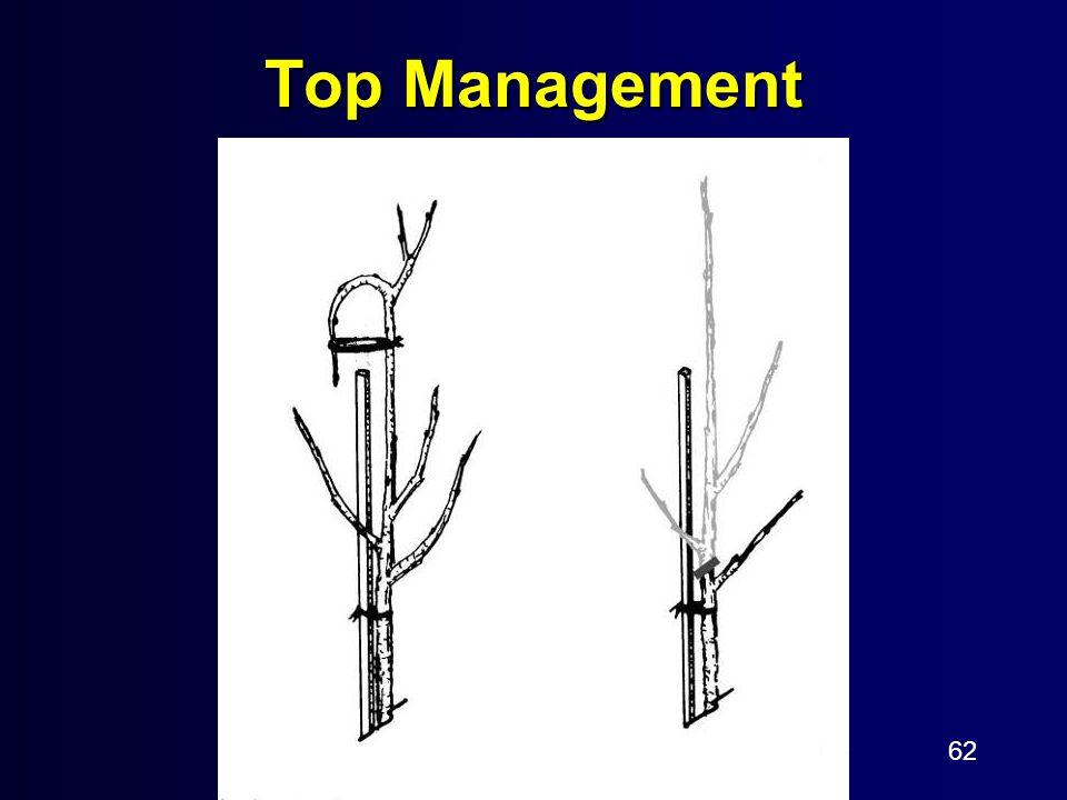 62 Top Management