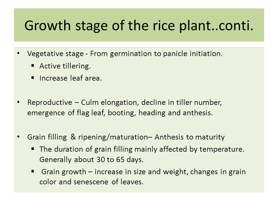 Vegetative stage - From germination to panicle initiation.  Active tillering.  Increase leaf area. Reproductive – Culm elongation, decline in tiller