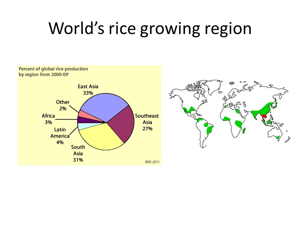 Origin of cultivated rice Only two cultivated species i.O.