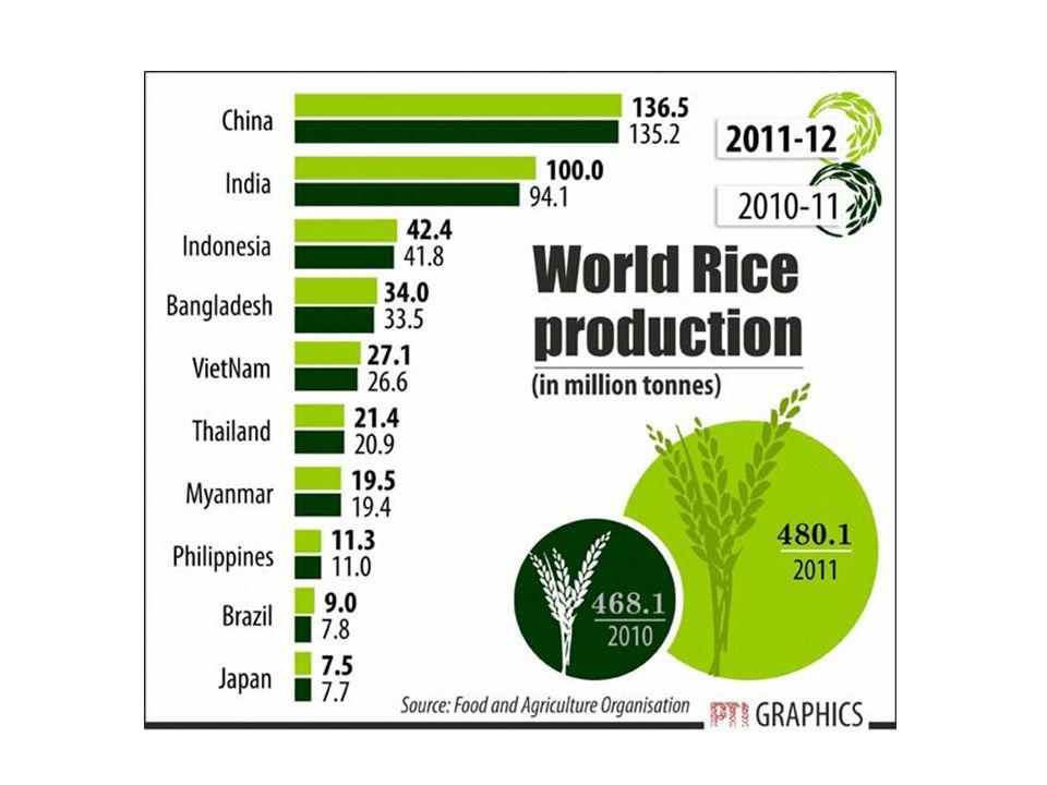 Rice production area and yield CountryRice area (000 ha)Yield (t/ha) China30,5036.23 India44,6003.01 USA1,2327.04 Egypt6609.09 Australia1459.6 Uruguay1856.35 Japan1,7706.7 Indonesia11,5234.43 Thailand10,0482.33 Vietnam7,6554.25 Malaysia6922.98 World153,7663.89