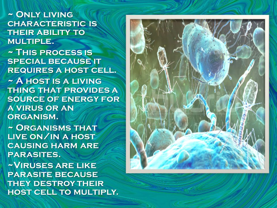 ~ No organisms are safe from viruses.~ Viruses are special in the specific cells they infect.