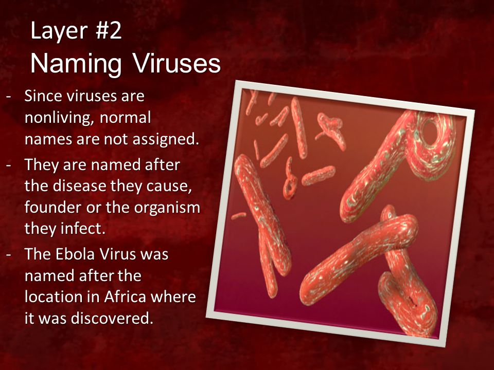 Layer #2 Naming Viruses -Since viruses are nonliving, normal names are not assigned. -They are named after the disease they cause, founder or the orga