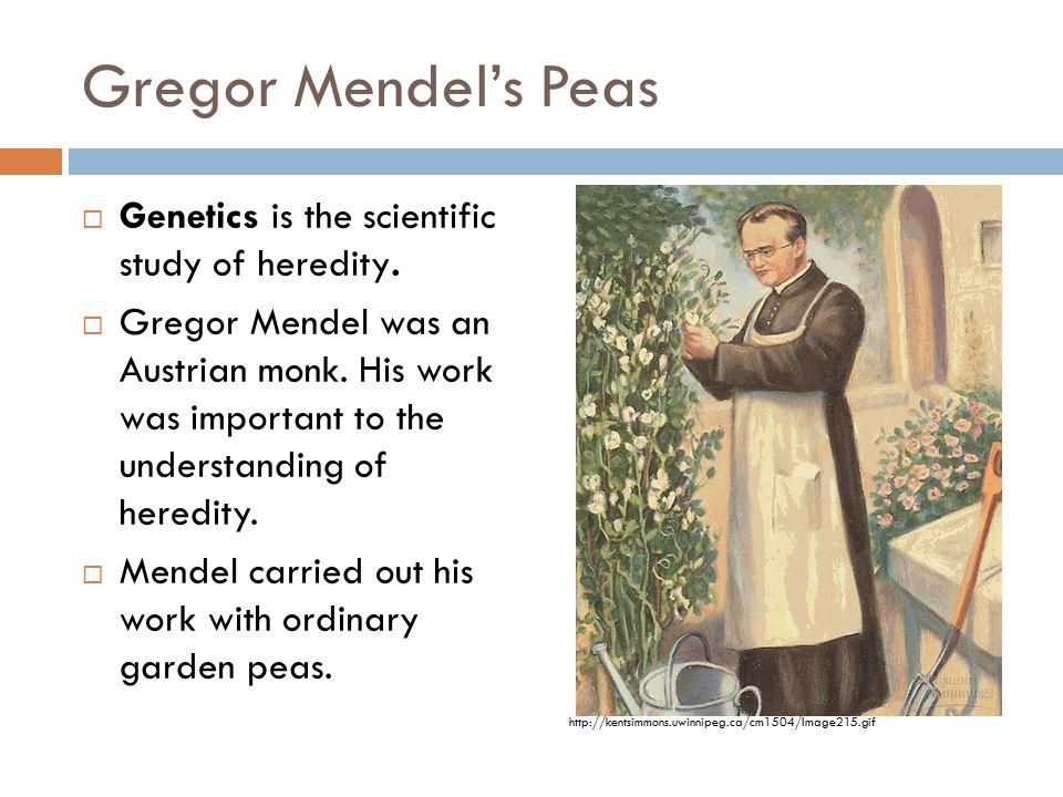 Gregor Mendel's Peas  Genetics is the scientific study of heredity.  Gregor Mendel was an Austrian monk. His work was important to the understanding