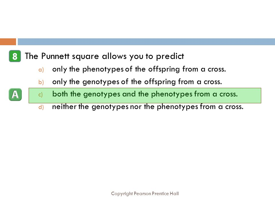 Copyright Pearson Prentice Hall The Punnett square allows you to predict a) only the phenotypes of the offspring from a cross. b) only the genotypes o