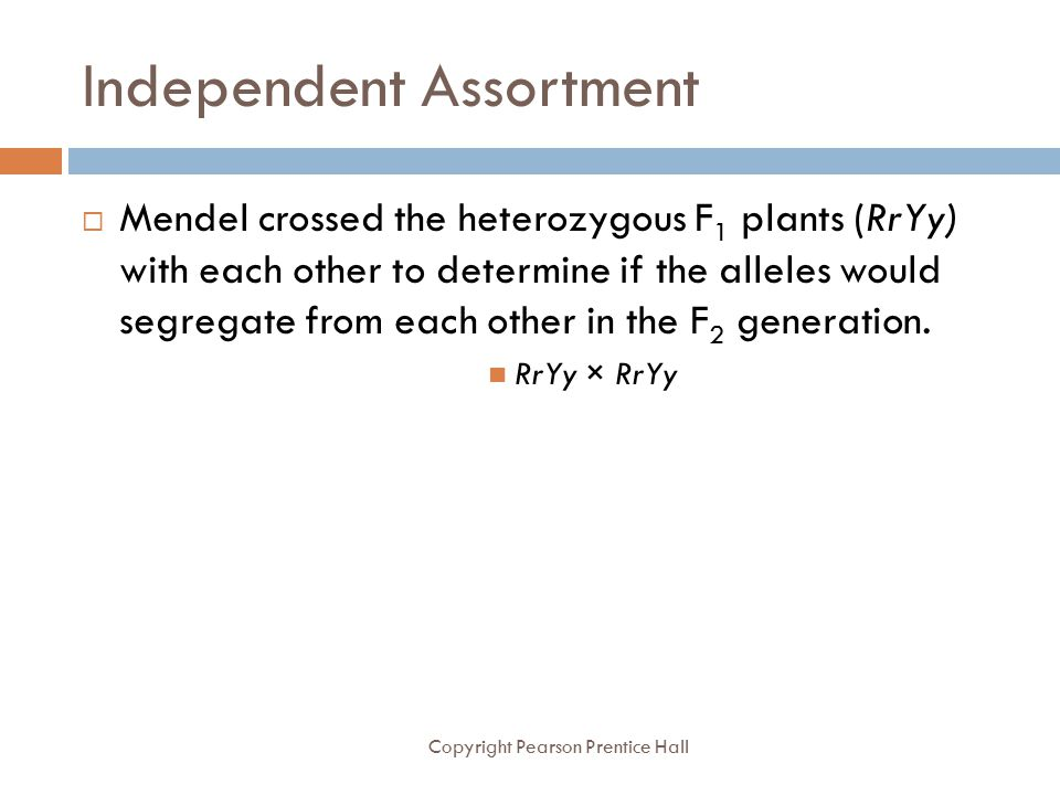 Independent Assortment Copyright Pearson Prentice Hall  Mendel crossed the heterozygous F 1 plants (RrYy) with each other to determine if the alleles