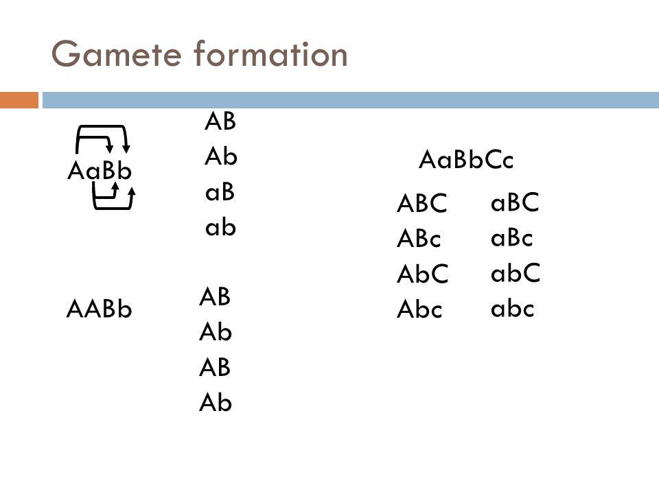 Gamete formation AaBb AB Ab aB ab AABb AB Ab AB Ab AaBbCc ABC ABc AbC Abc aBC aBc abC abc