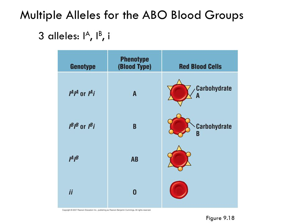 Multiple Alleles for the ABO Blood Groups 3 alleles: I A, I B, i Figure 9.18