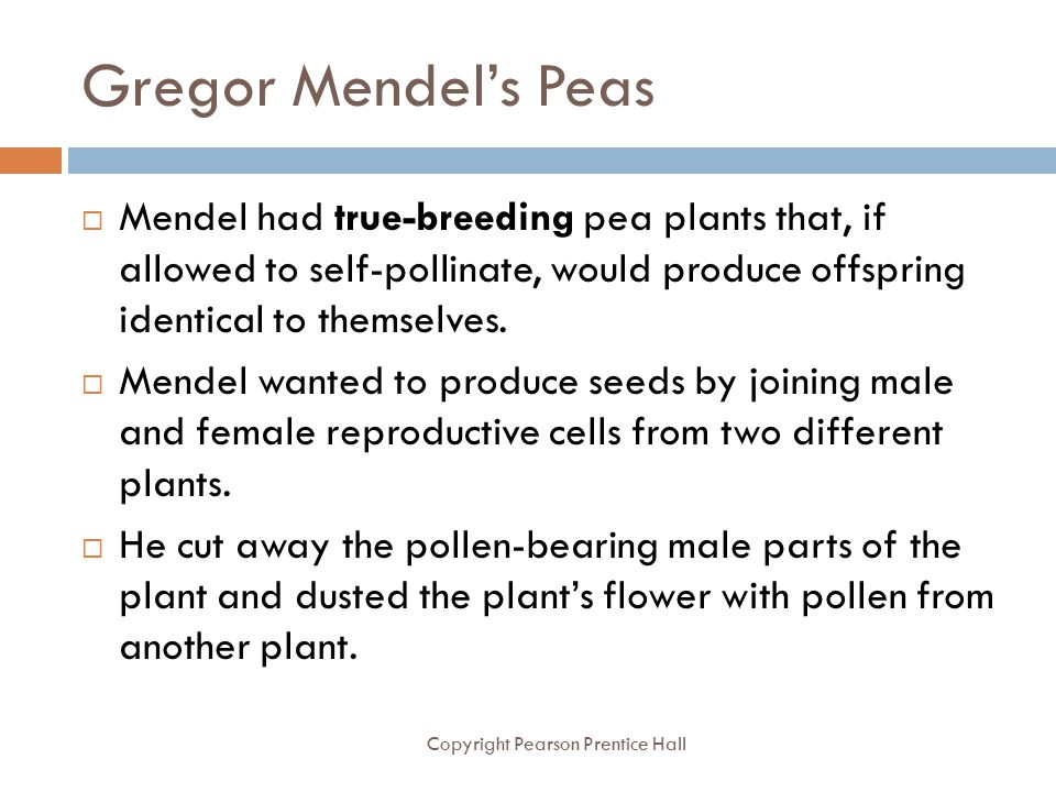 Gregor Mendel's Peas Copyright Pearson Prentice Hall  Mendel had true-breeding pea plants that, if allowed to self-pollinate, would produce offspring