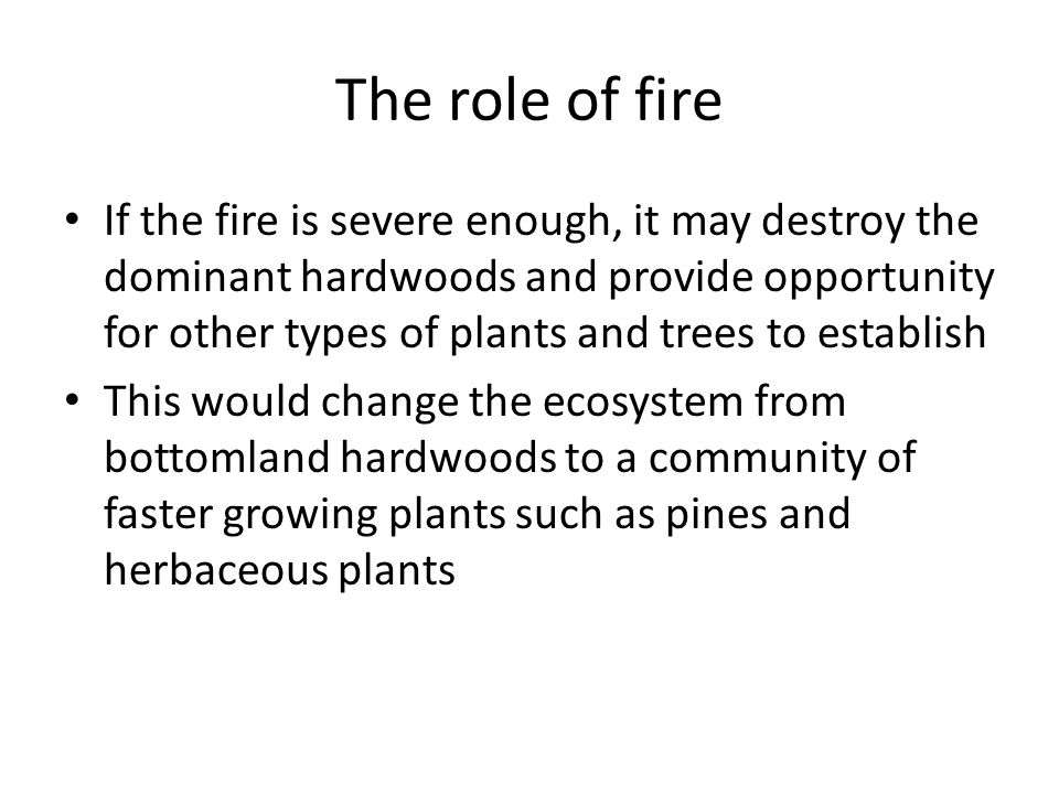 The role of fire If the fire is severe enough, it may destroy the dominant hardwoods and provide opportunity for other types of plants and trees to establish This would change the ecosystem from bottomland hardwoods to a community of faster growing plants such as pines and herbaceous plants