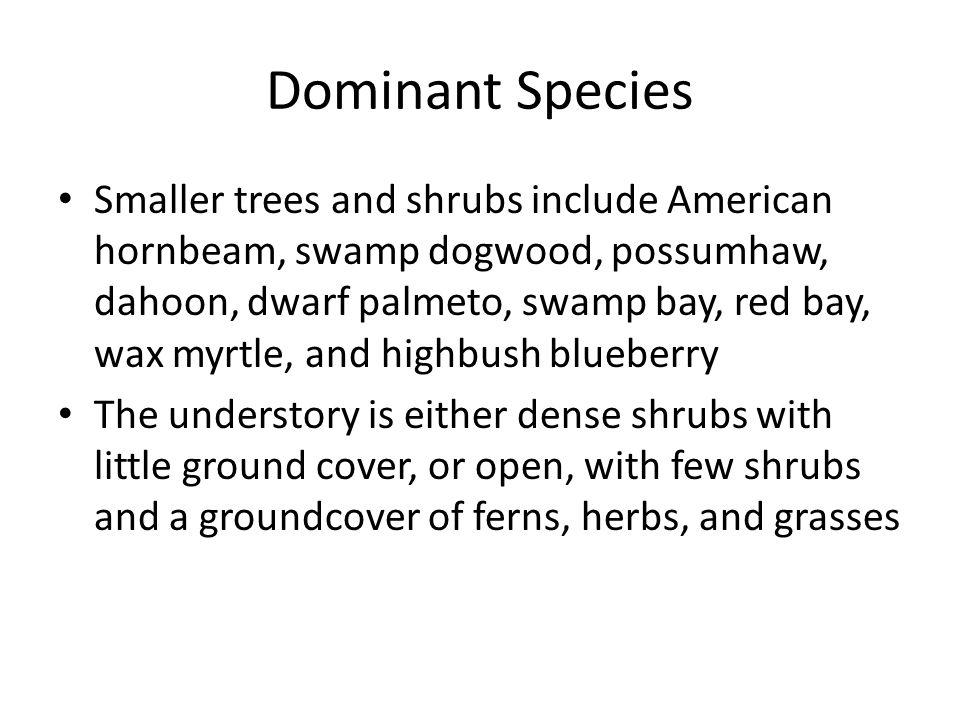 Dominant Species Smaller trees and shrubs include American hornbeam, swamp dogwood, possumhaw, dahoon, dwarf palmeto, swamp bay, red bay, wax myrtle,