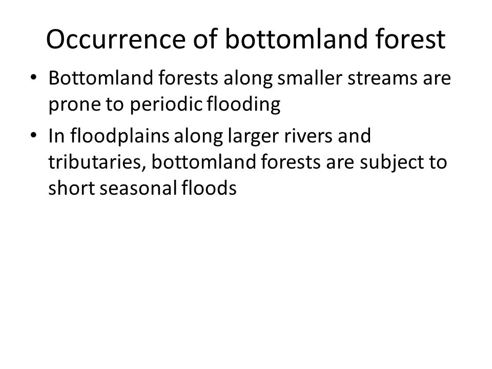 Occurrence of bottomland forest Bottomland forests along smaller streams are prone to periodic flooding In floodplains along larger rivers and tributaries, bottomland forests are subject to short seasonal floods