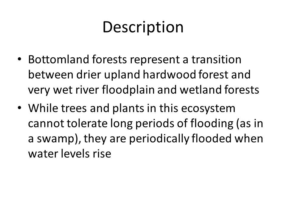 Description Bottomland forests represent a transition between drier upland hardwood forest and very wet river floodplain and wetland forests While trees and plants in this ecosystem cannot tolerate long periods of flooding (as in a swamp), they are periodically flooded when water levels rise