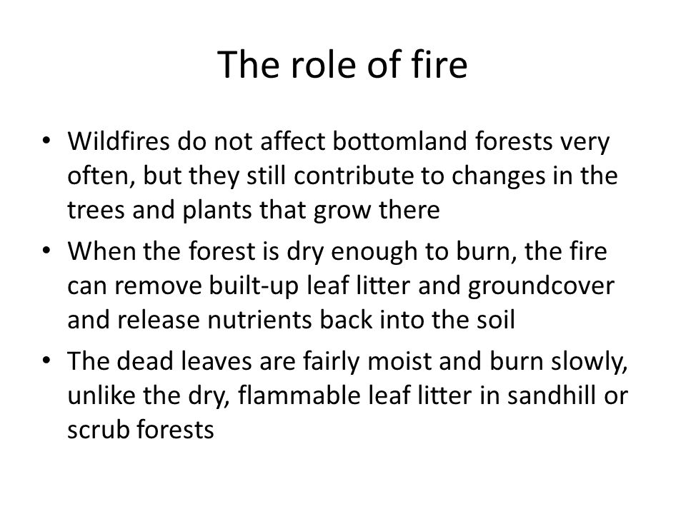 The role of fire Wildfires do not affect bottomland forests very often, but they still contribute to changes in the trees and plants that grow there When the forest is dry enough to burn, the fire can remove built-up leaf litter and groundcover and release nutrients back into the soil The dead leaves are fairly moist and burn slowly, unlike the dry, flammable leaf litter in sandhill or scrub forests