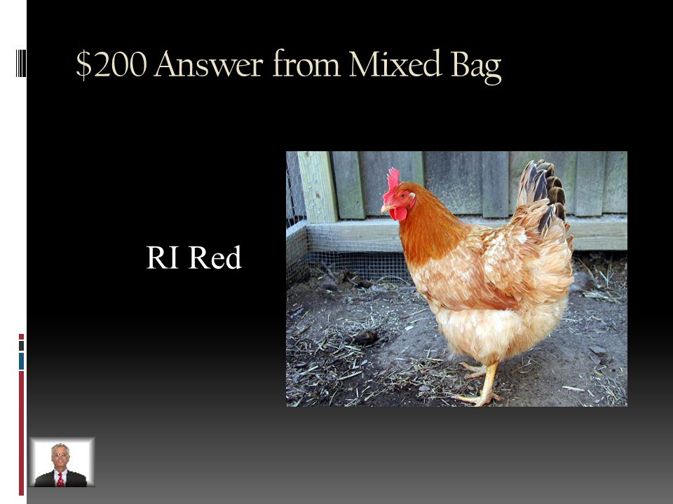 $200 Question from Mixed Bag Name the RI State Bird.