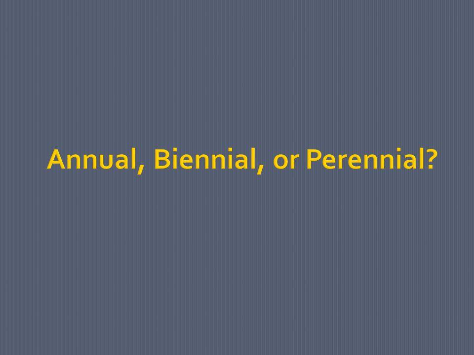 Annual, Biennial, or Perennial?
