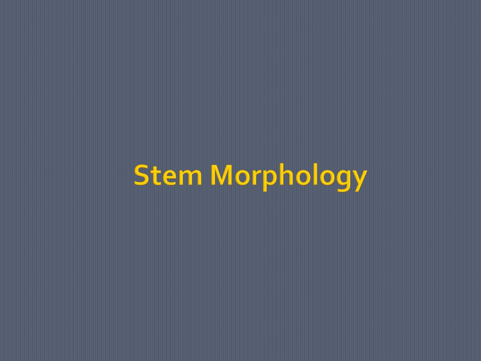 Stem Morphology
