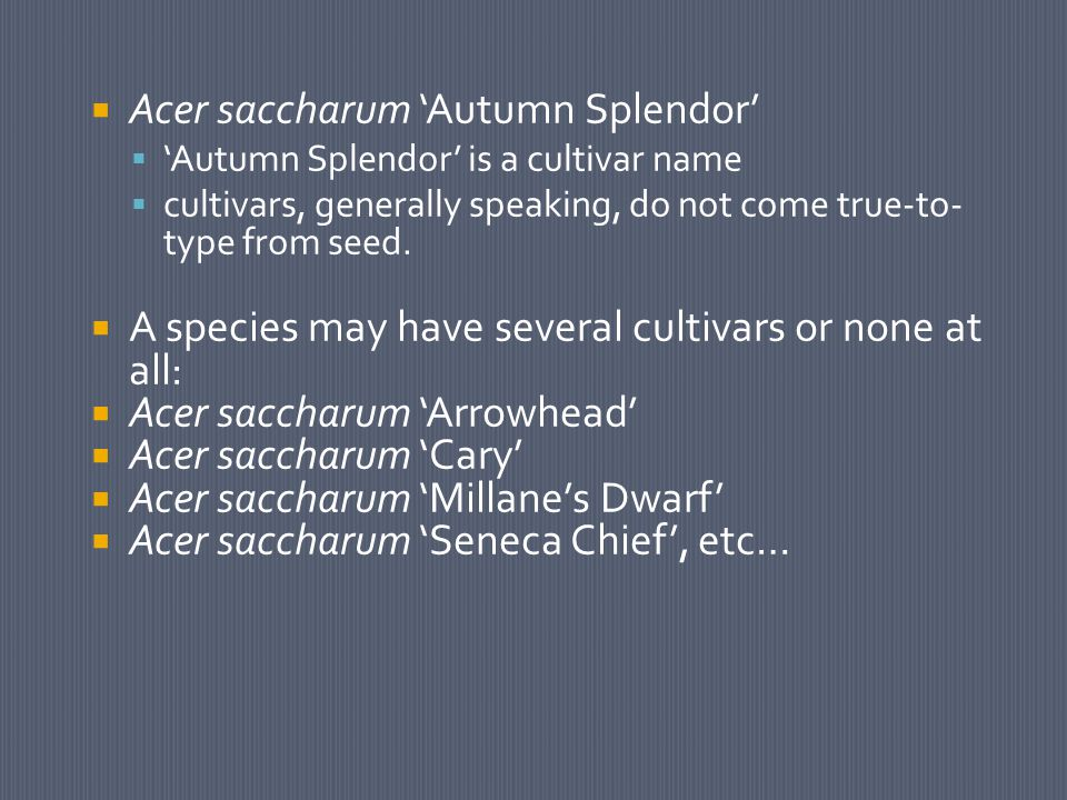  Acer saccharum 'Autumn Splendor'  'Autumn Splendor' is a cultivar name  cultivars, generally speaking, do not come true-to- type from seed.