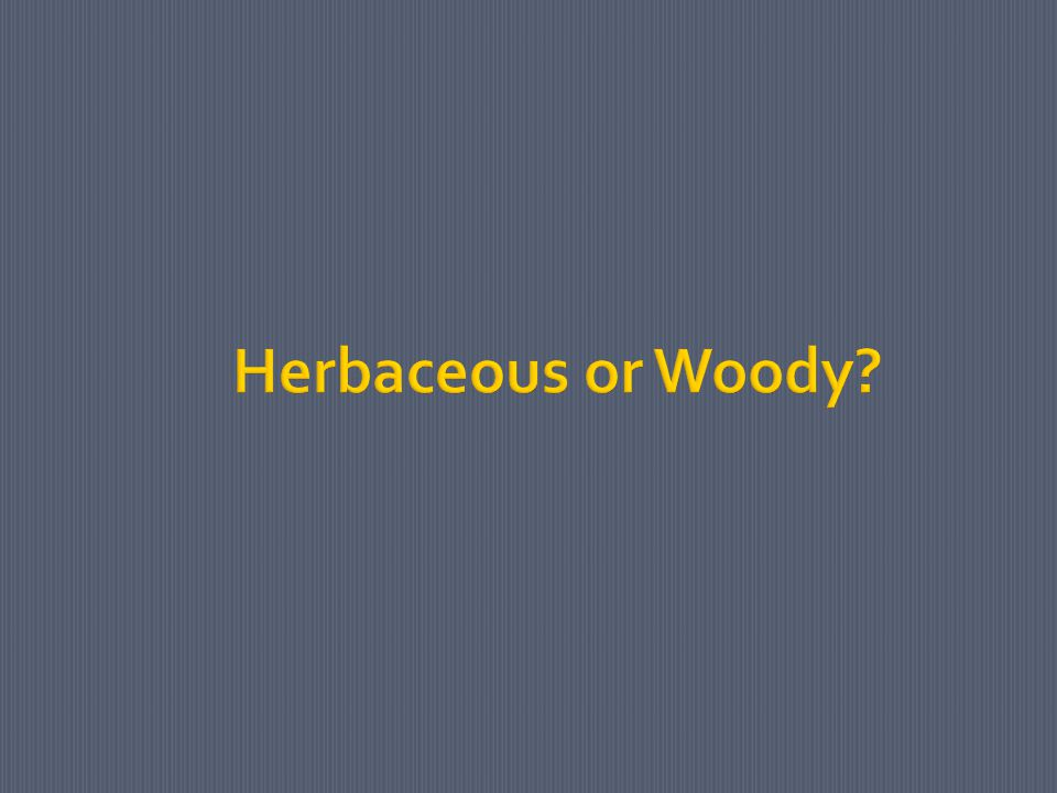 Herbaceous or Woody