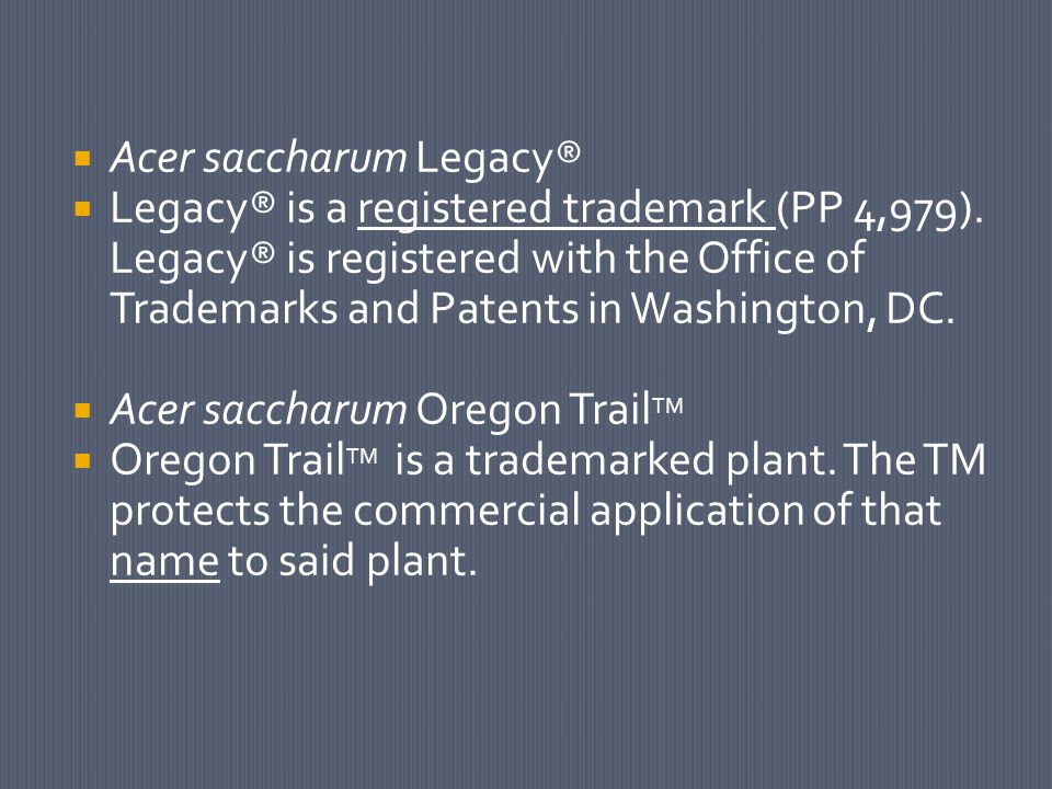  Acer saccharum Legacy®  Legacy® is a registered trademark (PP 4,979).