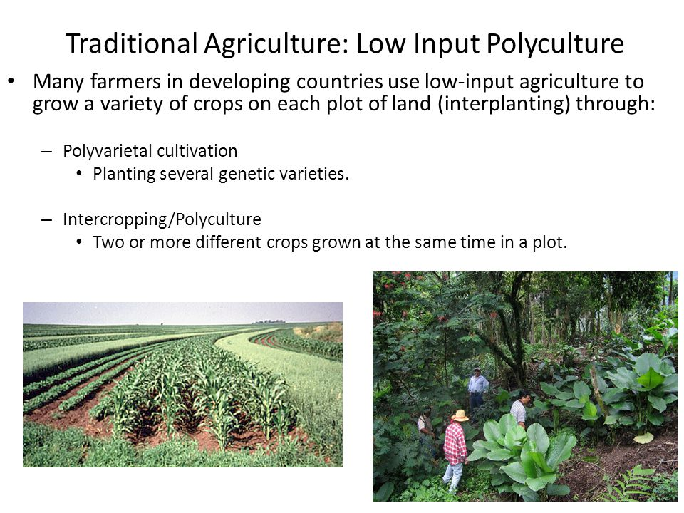 Polyculture Agriculture Advantages of polyculture: – Crops mature and ready to harvest at different times – Provides food throughout the year – Soil constantly covered, preventing erosion – Less need for fertilizer and water because roots are at different depths, using more of soil and increasing efficiency – Creates habitats for natural predators of pest species, reducing need for pesticides and herbicides