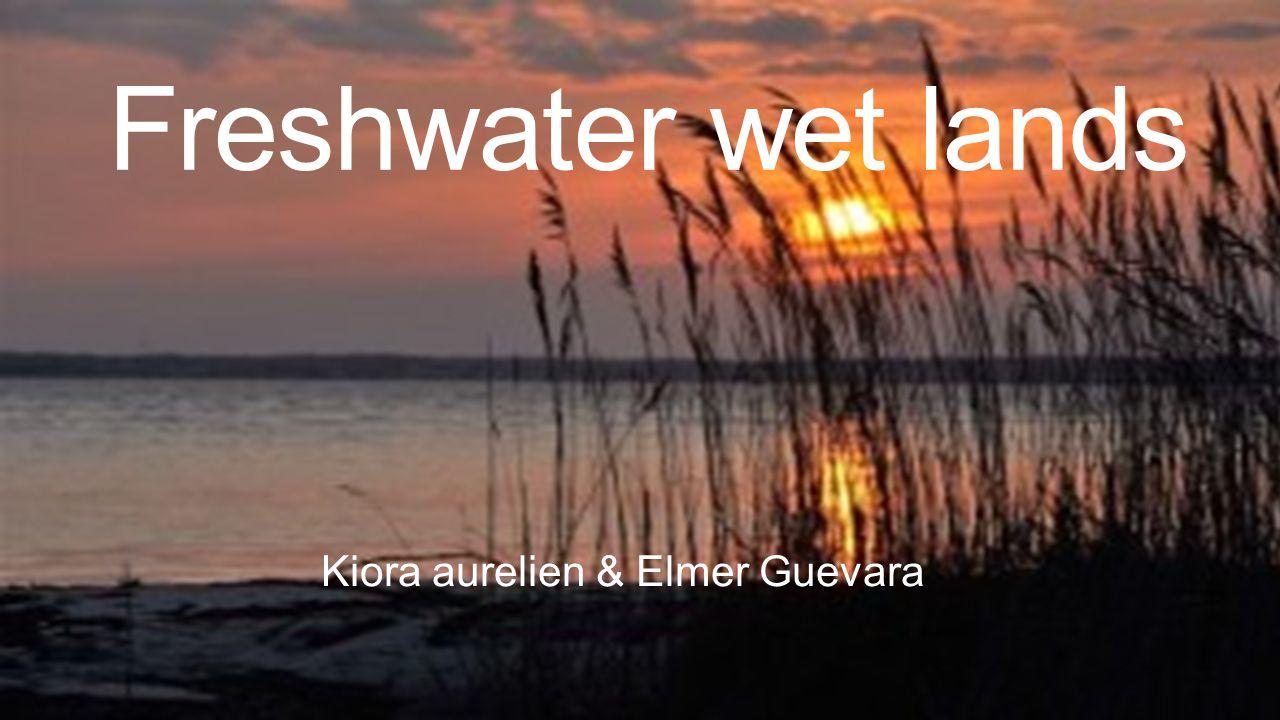 Freshwater wet lands Kiora aurelien & Elmer Guevara