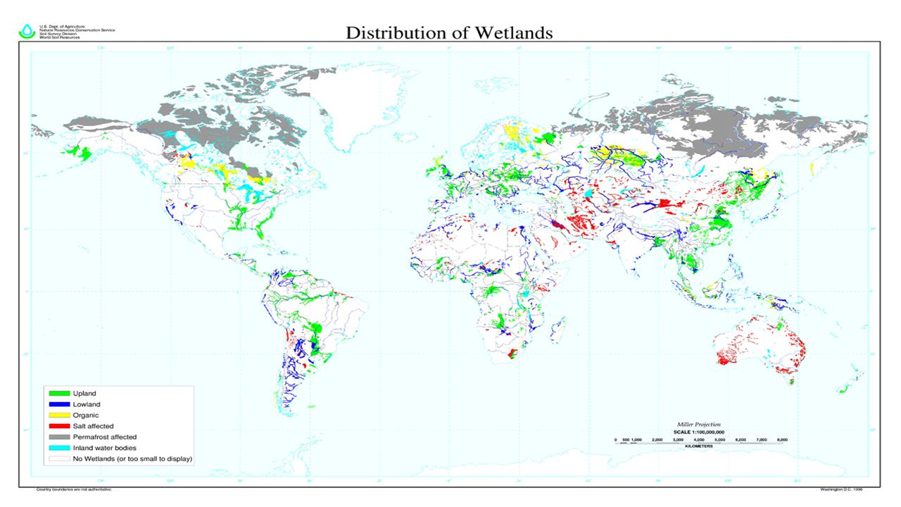 What are Freshwater Wetlands.