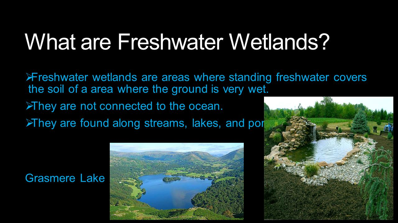 The types of Freshwater Lands Swamps Marshes