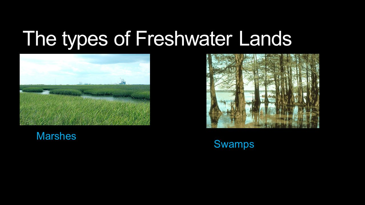 Marshes and Swamps Marshes- low lying water that becomes wet after a high tide or wet seasons.