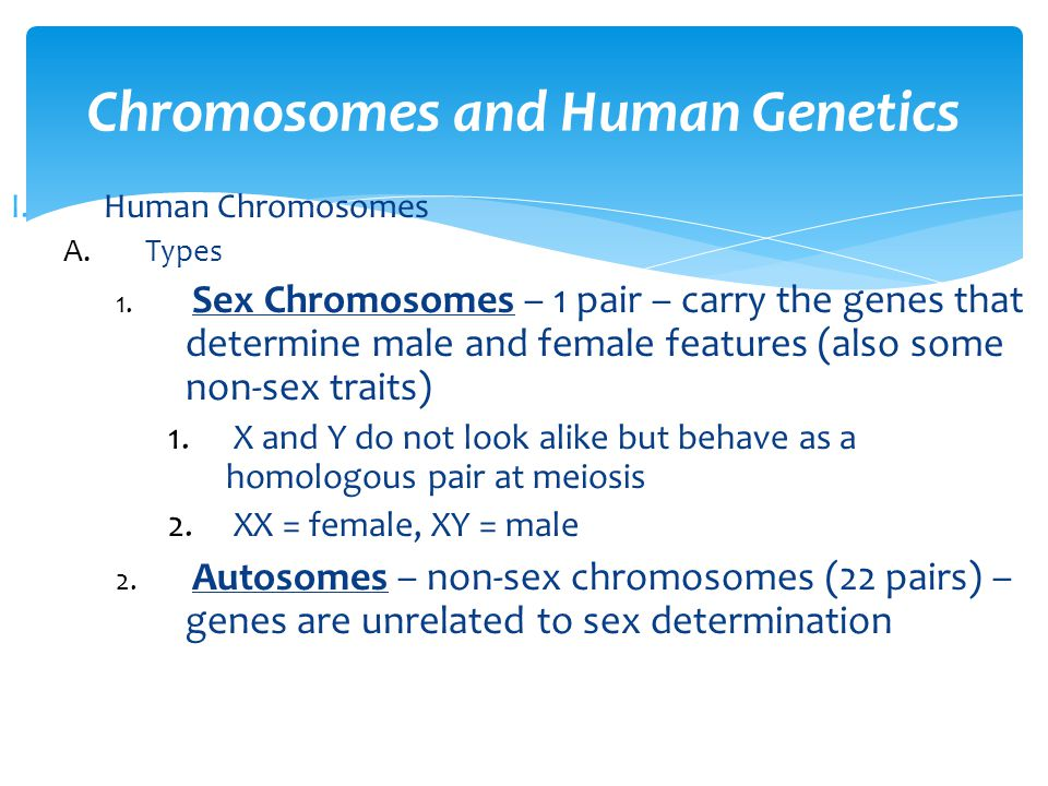 1.If a male is homozygous for blood type B and a female is heterozygous for blood type A, what are the possible blood types in the offspring.
