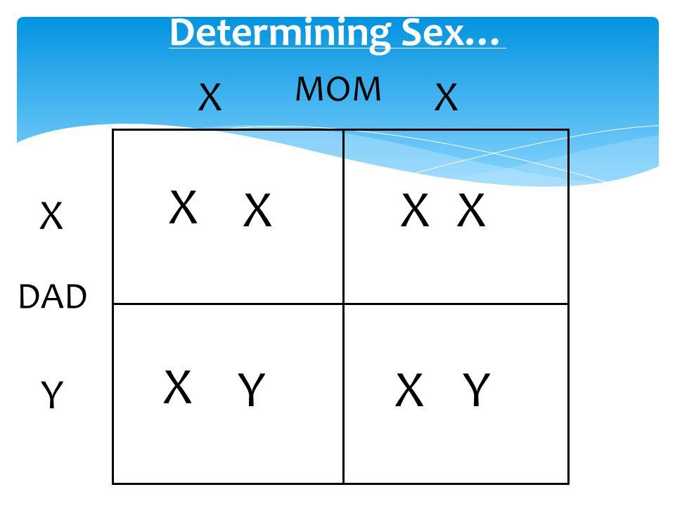 Chromosomes and Human Genetics I.Human Chromosomes A.Types 1.