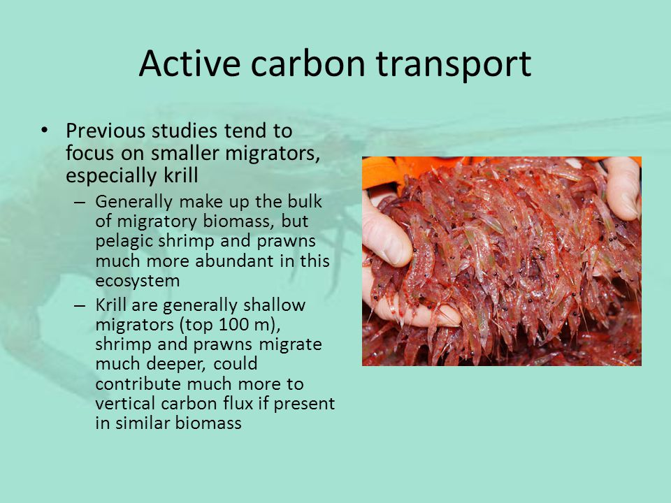 Active carbon transport Previous studies tend to focus on smaller migrators, especially krill – Generally make up the bulk of migratory biomass, but p