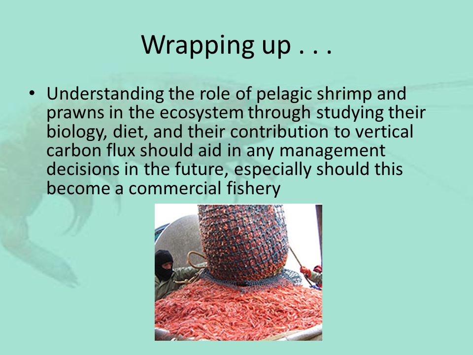 Wrapping up... Understanding the role of pelagic shrimp and prawns in the ecosystem through studying their biology, diet, and their contribution to ve